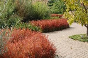 načrtovanje vrta - okrasne trave