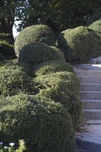 zimzelene rastline