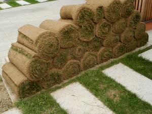 travna ruša