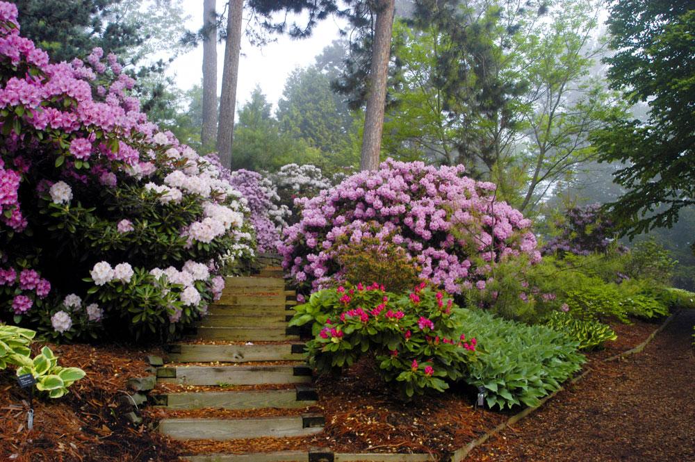 Kisla tla – veselje za kisloljubne rastline