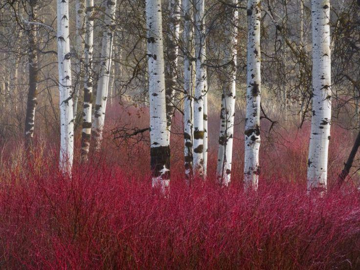 Zimsko veselje – naj bo vaš vrt zanimiv tudi pozimi