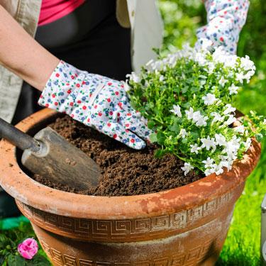 Vrtna opravila na okrasnem vrtu v maju