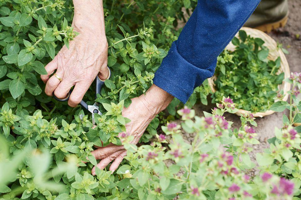 vrtna opravila julij