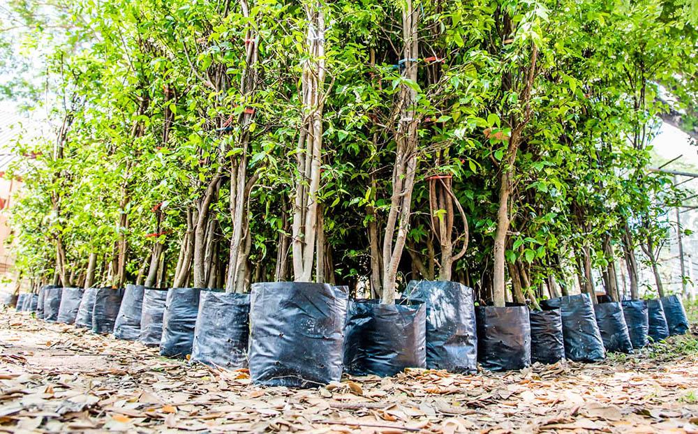 Sajenje dreves in grmovnic za dober začetek