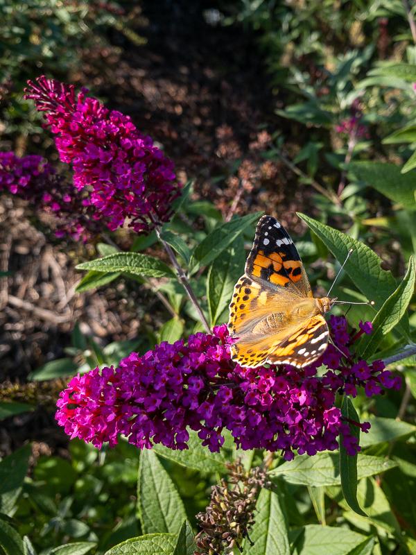 metuljnik