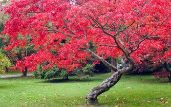 manjša drevesa