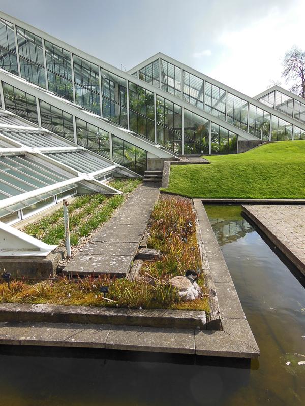 botanični potepi - Kew - rastlinjak princese Avguste