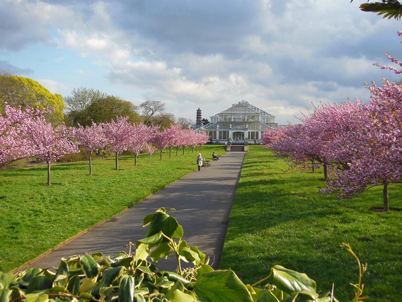Botanični potepi: Kew gardens